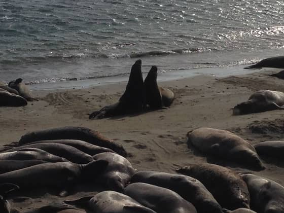 seals on pacific coast highway